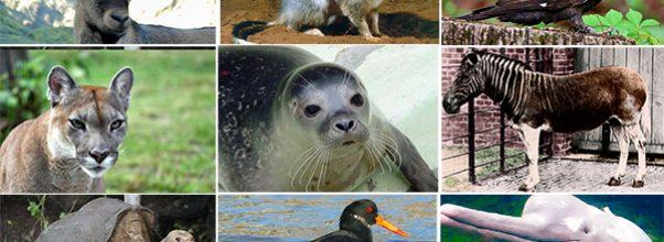 12 animales que ya se extinguieron