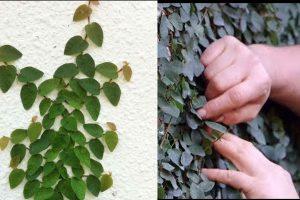 Decora tu hogar con plantas trepadoras