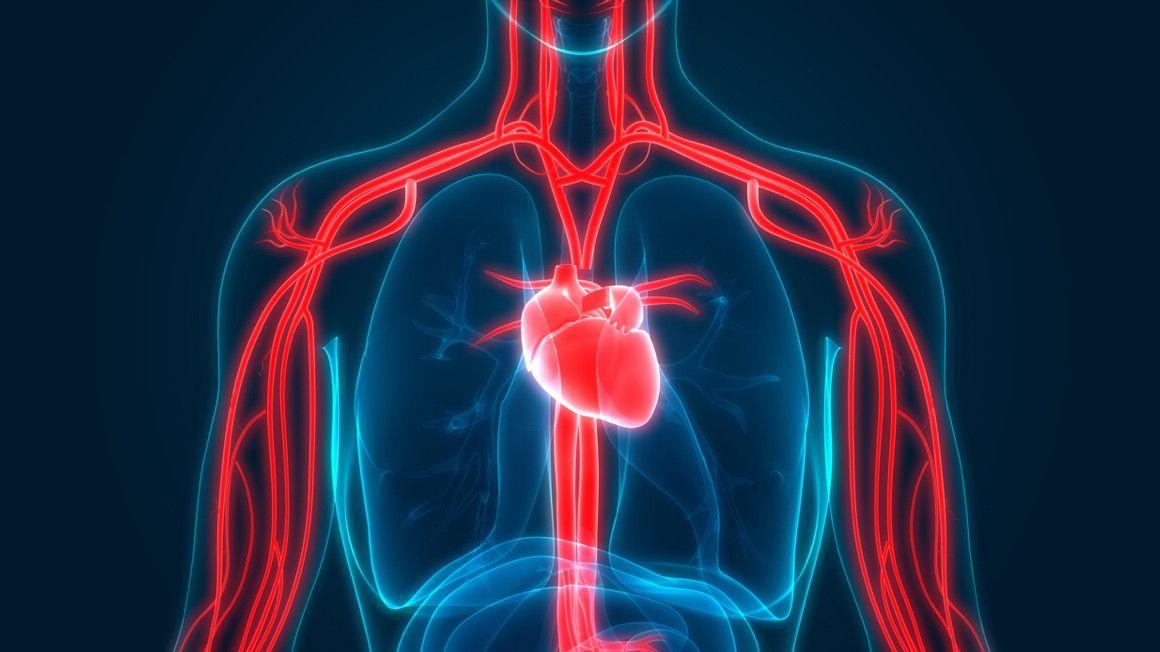 Fluyen Mahen ayuda a mejorar la circulación sanguínea