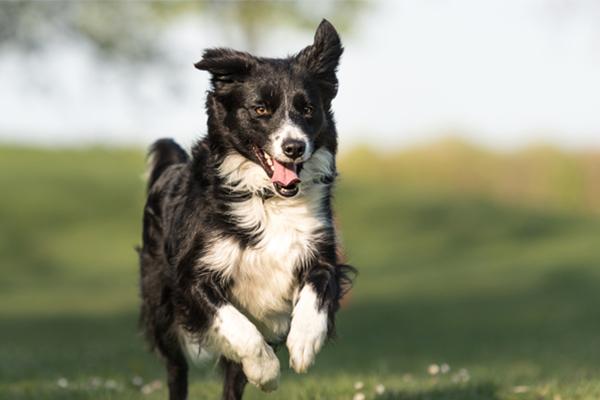 22 nombres para perros inspirados en el arte