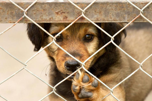 Como adoptar un cachorro de forma segura por internet