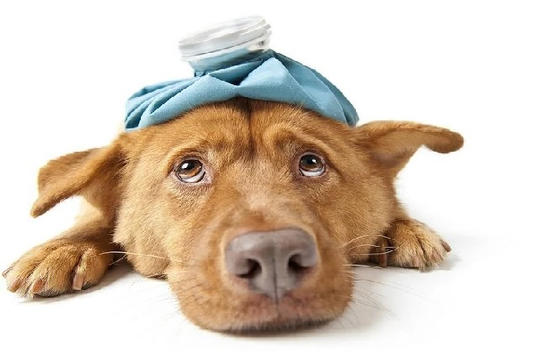 Las mascotas y el seguro de vida
